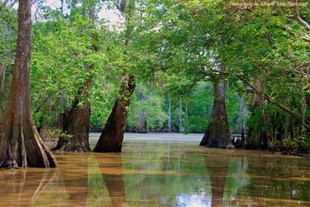 New Orleans Tours - Swamp, Airboat, Plantation, City, Ghost Tours
