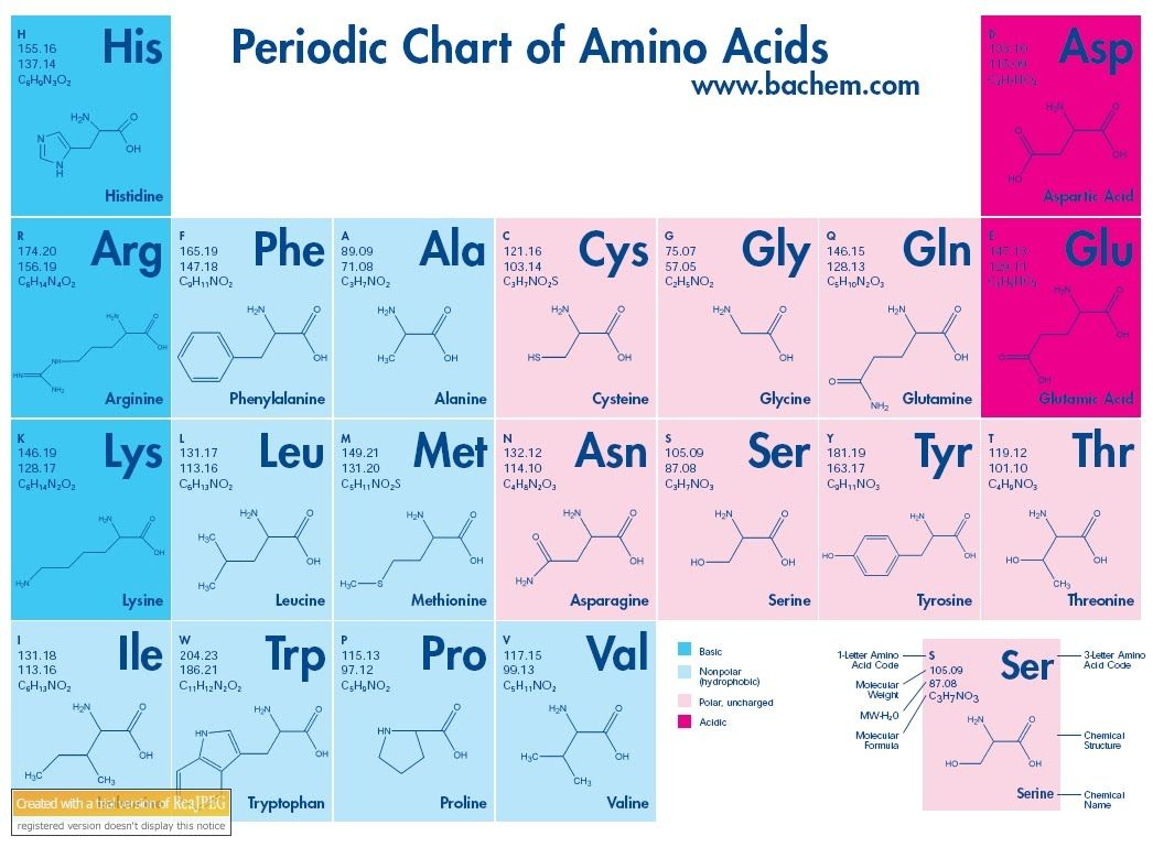 Amino acid chart google search a exam images pinterest periodic table of amino acids gamestrikefo Choice Image