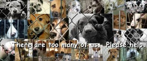 This Is Wht Dogs Go Through They Need To Be Treated Right Dogs Dog Breeds Puppies And Kitties