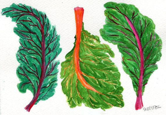 Swiss Chard Original Watercolor Painting Vegetable Paintind Etsy Watercolor Paintings Original Watercolors Original Watercolor Painting