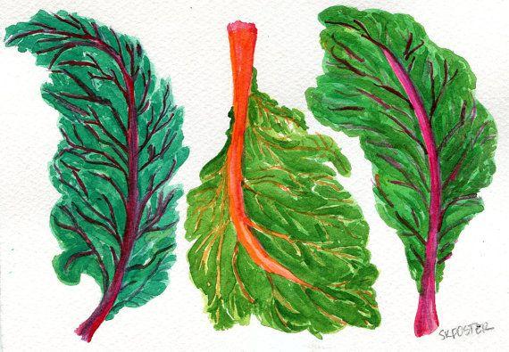 Swiss Chard Original Watercolor Painting Vegetable Paintind Etsy Watercolor Paintings Original Watercolors Original Watercolor Painting