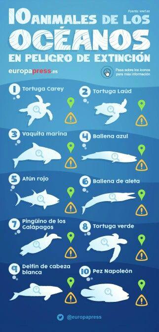 Infografia Animales Marinos En Peligro De Extinción Animales En Peligro De Extincion En Peligro De Extincion Extincion