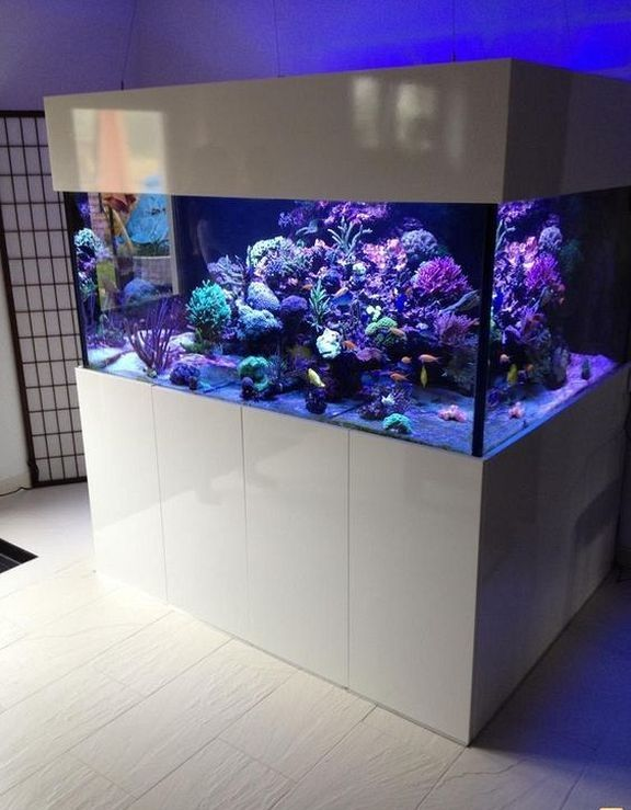 20+ Amazing Indoor Aquarium Design Ideas For Inspiring