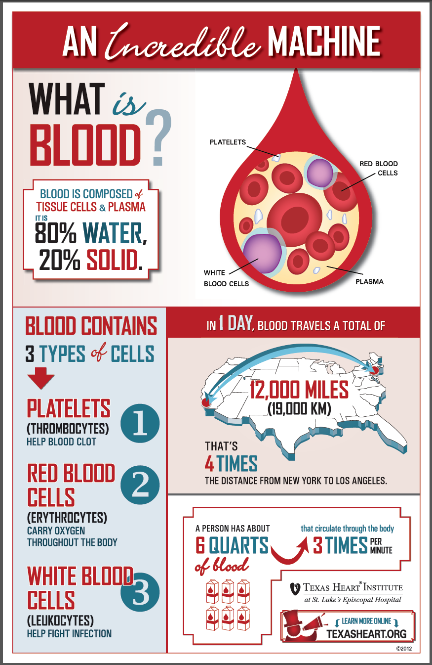 Fun facts about the blood, an incredible machine by Texas Heart ...