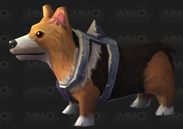 Picture Of A World Of Warcraft Corgi With An Armor Nobody Knows