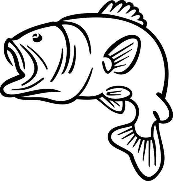 bass fish outline coloring pages