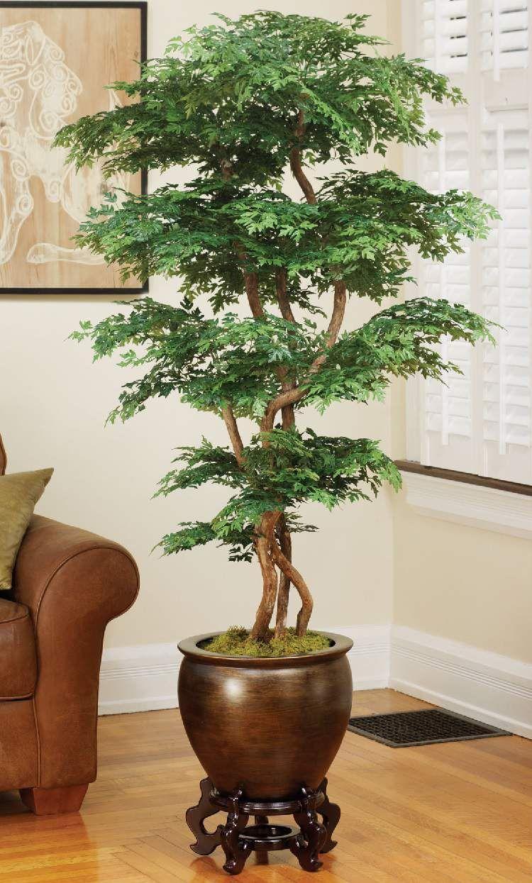 24 plantas perfeitas para decorar o interior da sua casa for Plantas de interiores
