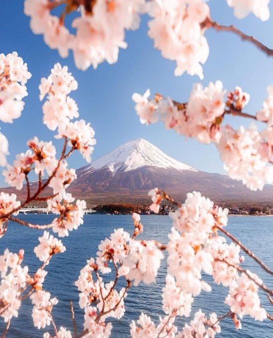 Earth On Twitter In 2021 Japan Vacation Mount Fuji Japan Mount Fuji