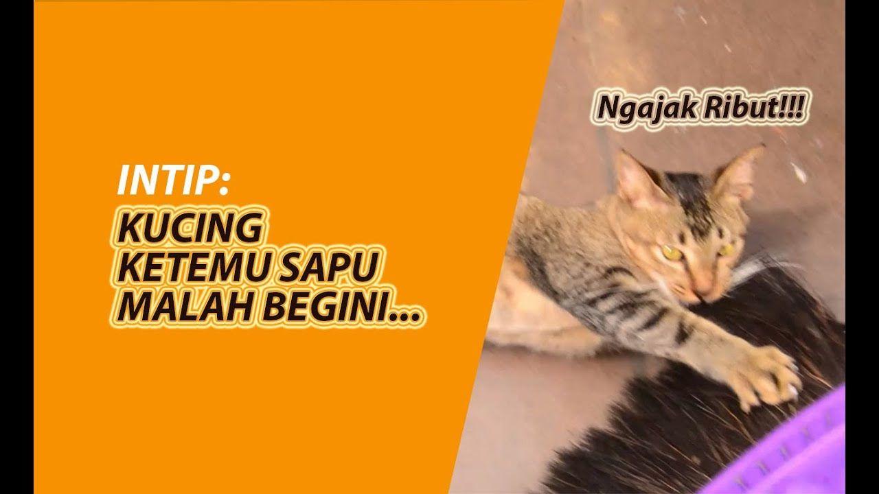 Intip Kucing Ketemu Sapu Kucing Sapu