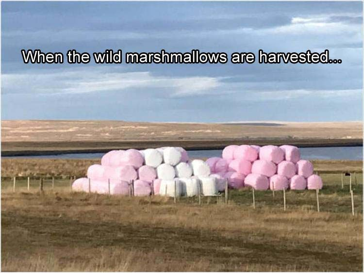 wild-marshmellows funny pictures with captions pictures funny