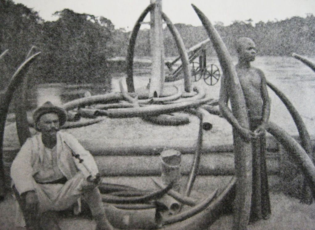 Image result for ivory hunting in congo