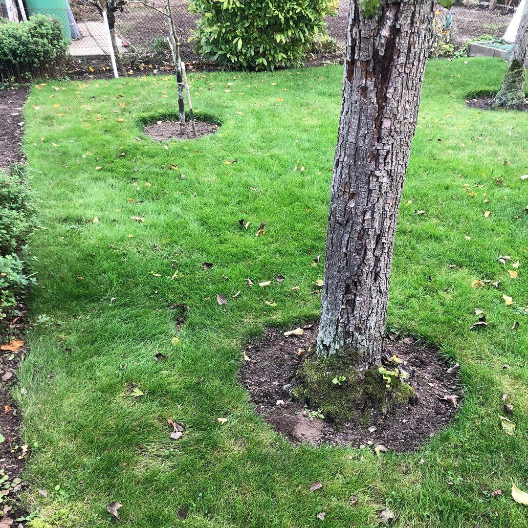 Heute Durfte Ich Mal Den Rasen Bei Meinen Schwiegereltern Im Garten Mahen Vorher Musste Ich Den Garten Umgraben Ein Baum Ausbuddeln U Plants Tree Tree Trunk