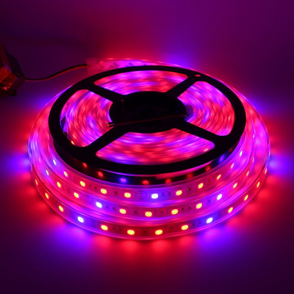 Dc 12v Led Plant Grow Strip Light 5m 300 Leds Full Spectrum Smd 5050 Red Blue 4 1 For Plants Growing Aquarium Greenhouse Light Led Grow Lights Plant Lighting Grow Lights