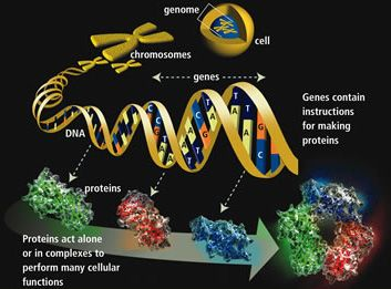chemical dna structure - Google 검색
