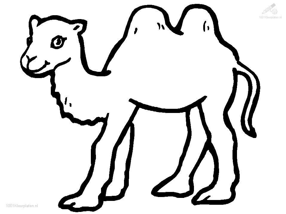 Camel Coloring Page  Free Coloring Pages For KidsFree Coloring