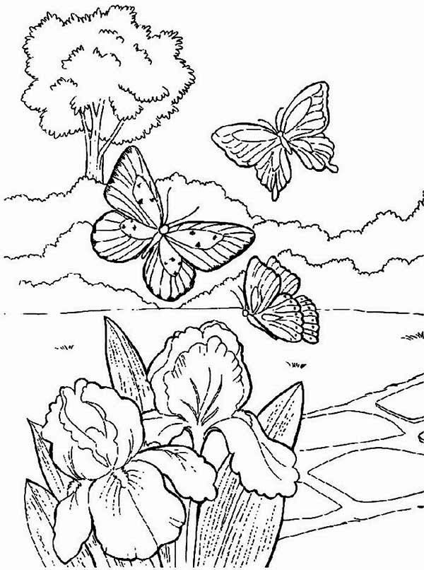 Spring Butterflies Looking For Flower Coloring Page