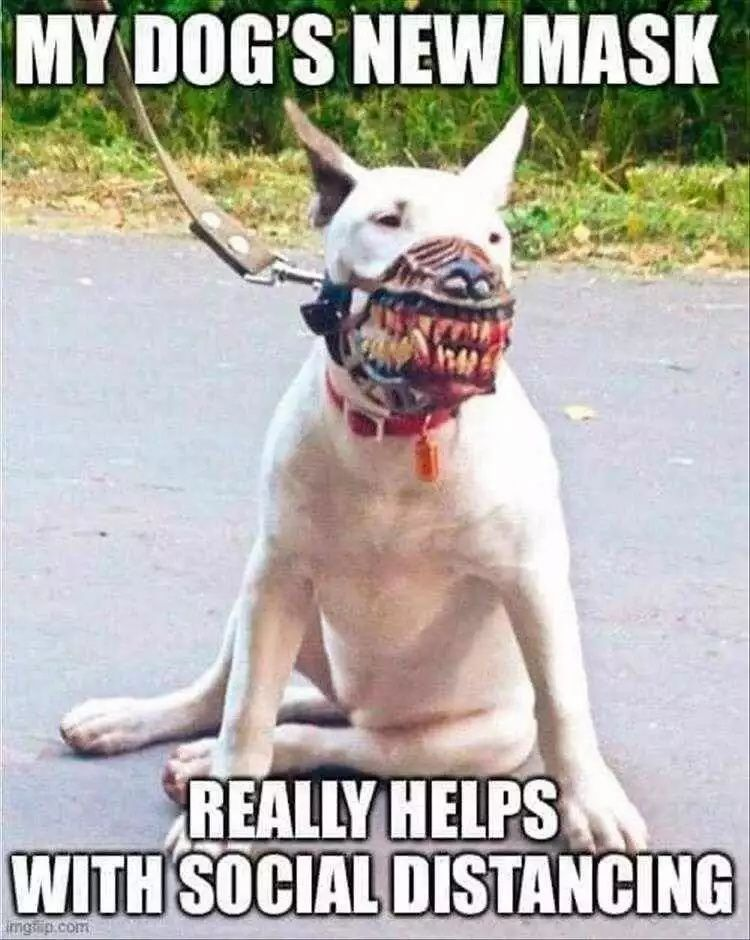 Top 26 Funny Animal Meme Pictures Of The Day | Funny dog memes, Funny  animal memes, Funny animal pictures