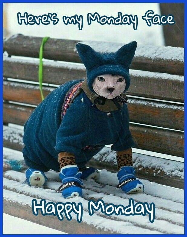 Happy Monday Kitten pictures, Cute animals, Sphynx cat