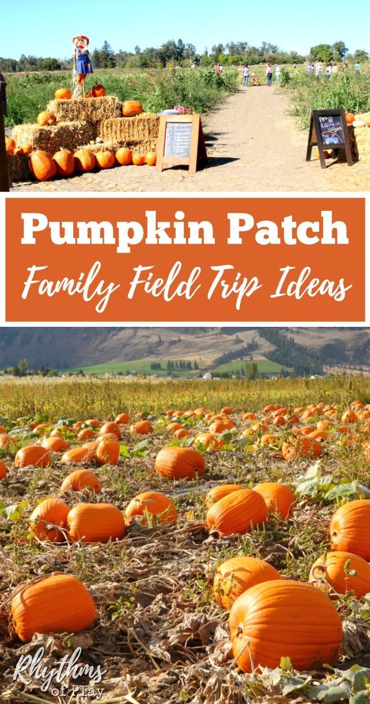 Pumpkin Patch Field Trip Activities Autumn Activities