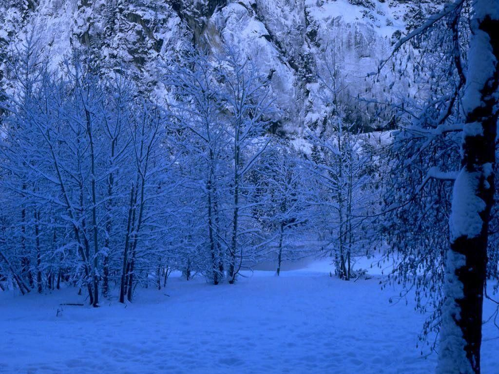 Snowy Forests Snowy Forest Wallpapers Wallpaper Cave