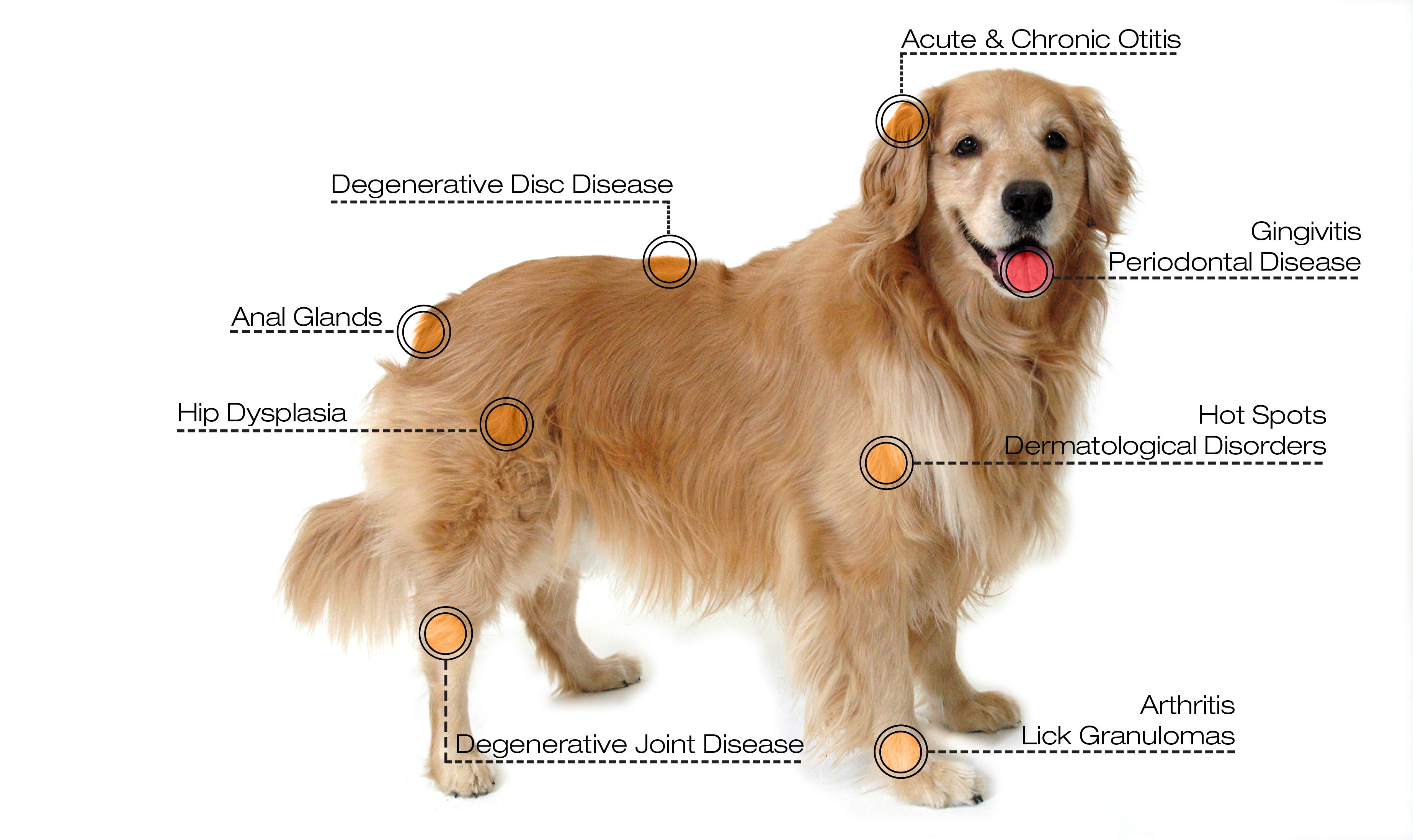A Diagram Of A Dogs Health - Auto Wiring Diagram Today •