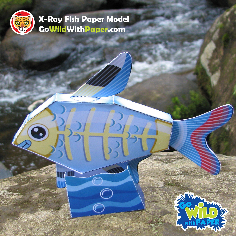 X Ray Fish Craft Activity