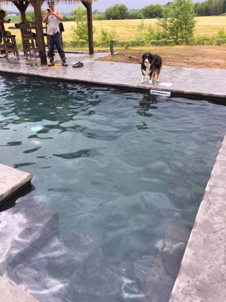 Les Roi De La Piscine : piscine, Beton, Piscine, Outdoor,, Outdoor, Decor,