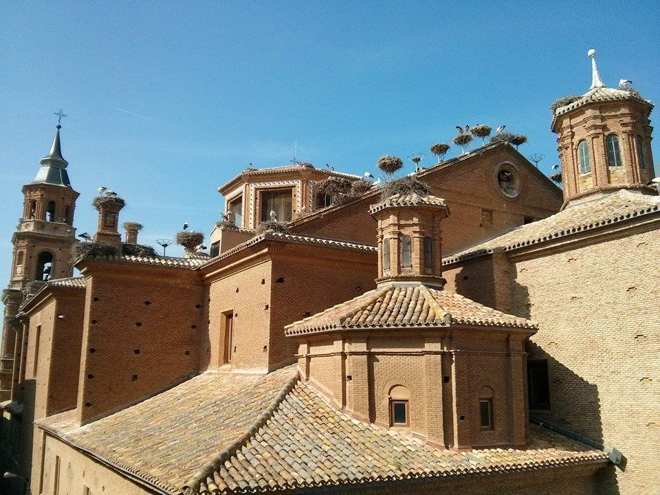 Mirador de las cigüeñas, Colegiata de San Miguel, Alfaro La Rioja #fauna