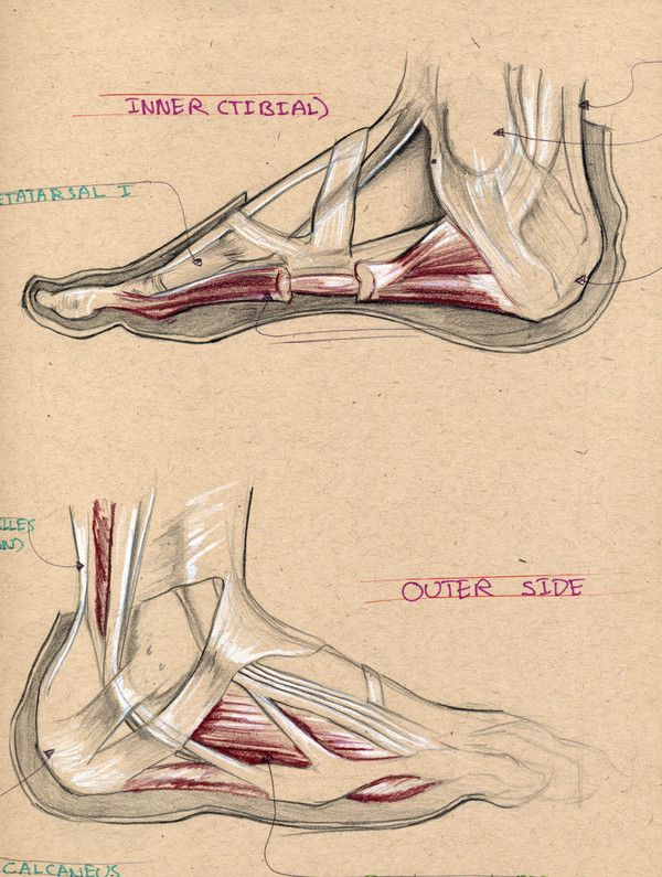grounding through the feet | *Active Feet* | Pinterest | Anatomy ...