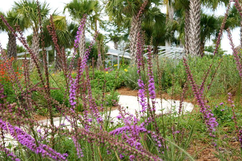 Naples Botanical Gardens Florida Gardens Florida