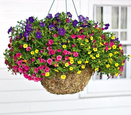 Hardiness Zone 1 11 S 1 11 W Height 10 Exposure Full Sun Blooms In May Sept 6 Plants Create An White Flower Farm Hanging Garden Container Flowers