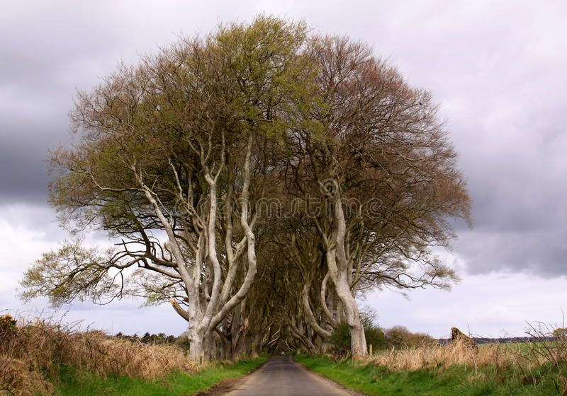 Entry to The Dark Hedges Northern Ireland The Dark Hedges Northern Ireland A