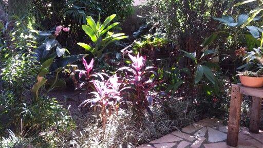 meu jardim....