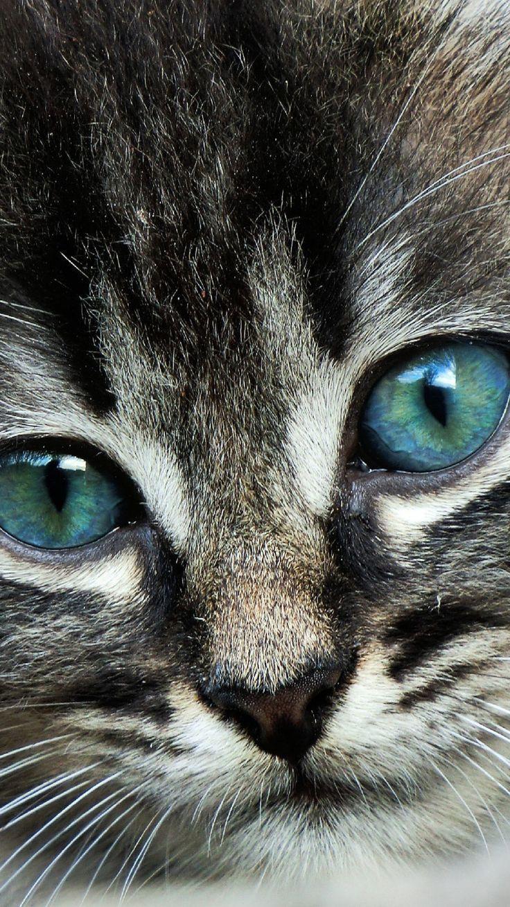 Photo of Ojos de gato azul – Animales – #Azul #Ojos de gato #Animales