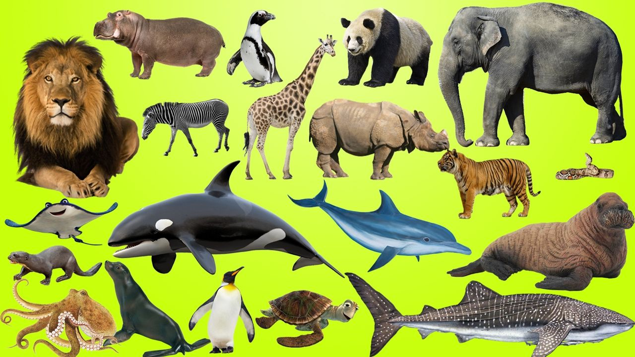 animals learn for kids - Pictures Of Animals For Kids