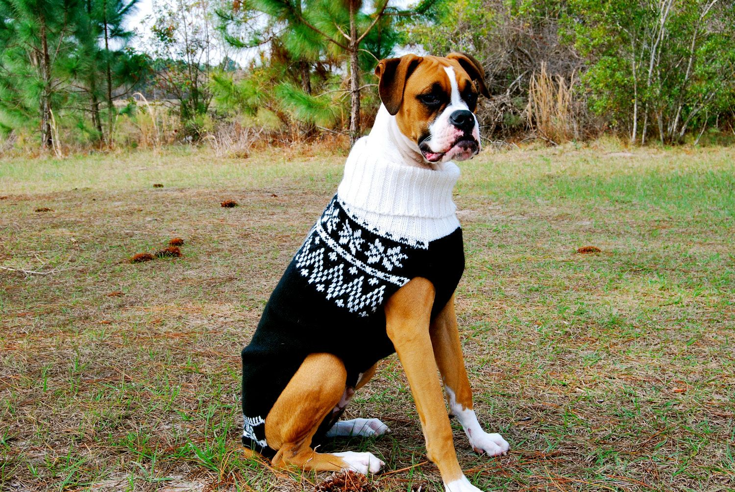 CABLE AND HEARTS PETITE DOG COAT KNITTING PATTERN EX LARGE