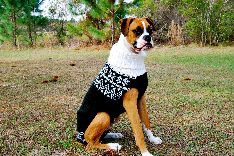 Big Dog Wearing Sweater Large dog sweat...