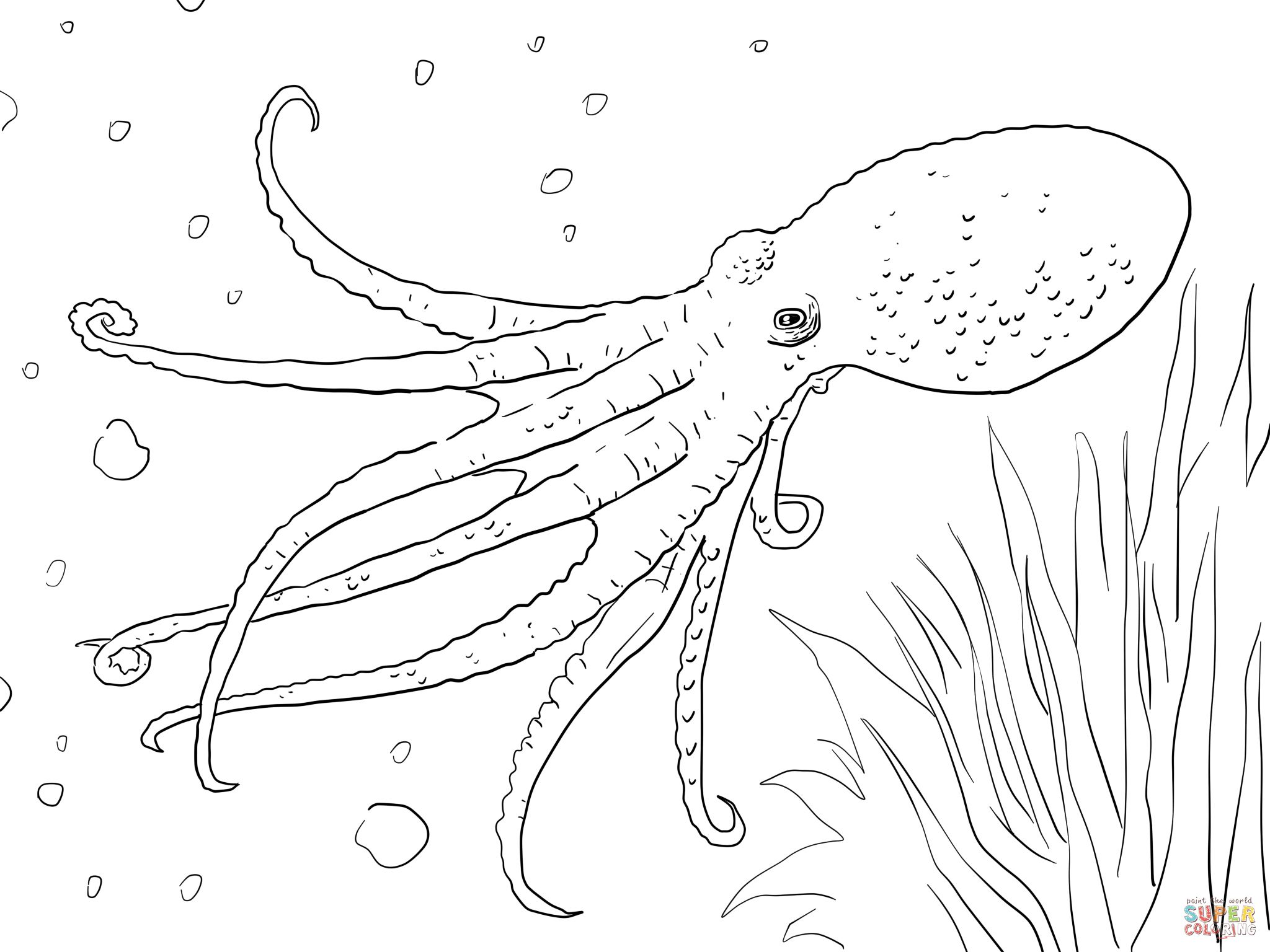 Adult Cute Octopus Color Page Images beauty 1000 images about octopus on pinterest drawing illustration and tattoo design images