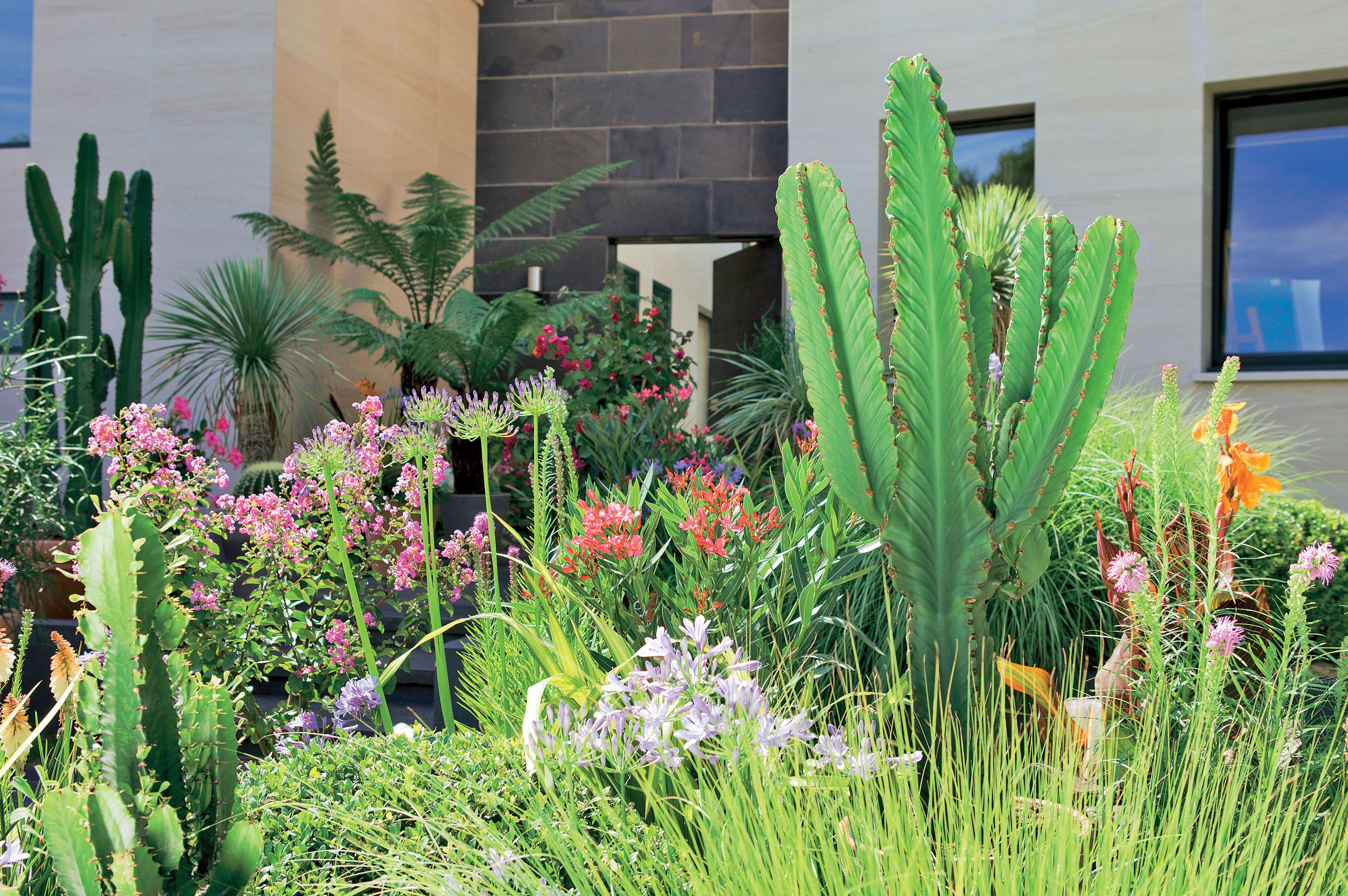 Un Jardin Exotique Colore Depaysant C Est Possible Bananier