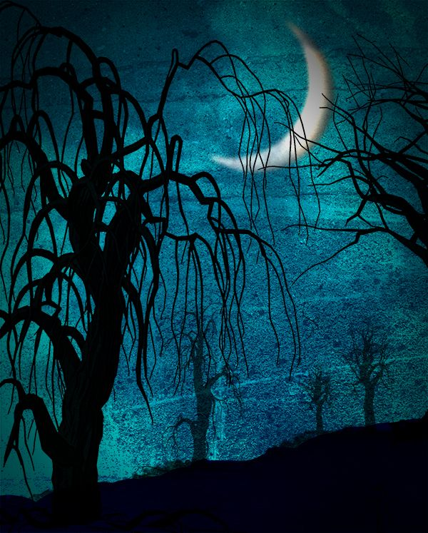 Spooky Night Printed Backdrop Halloween Photography Pinterest - halloween backdrop
