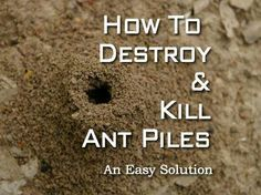 Destroy And Kill Ant Piles An Easy Solution Ants In Garden