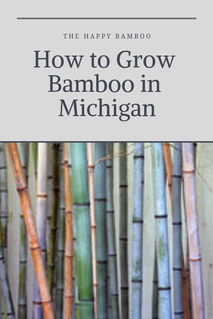 Can You Grow Bamboo In Michigan Growing Bamboo Bamboo Michigan