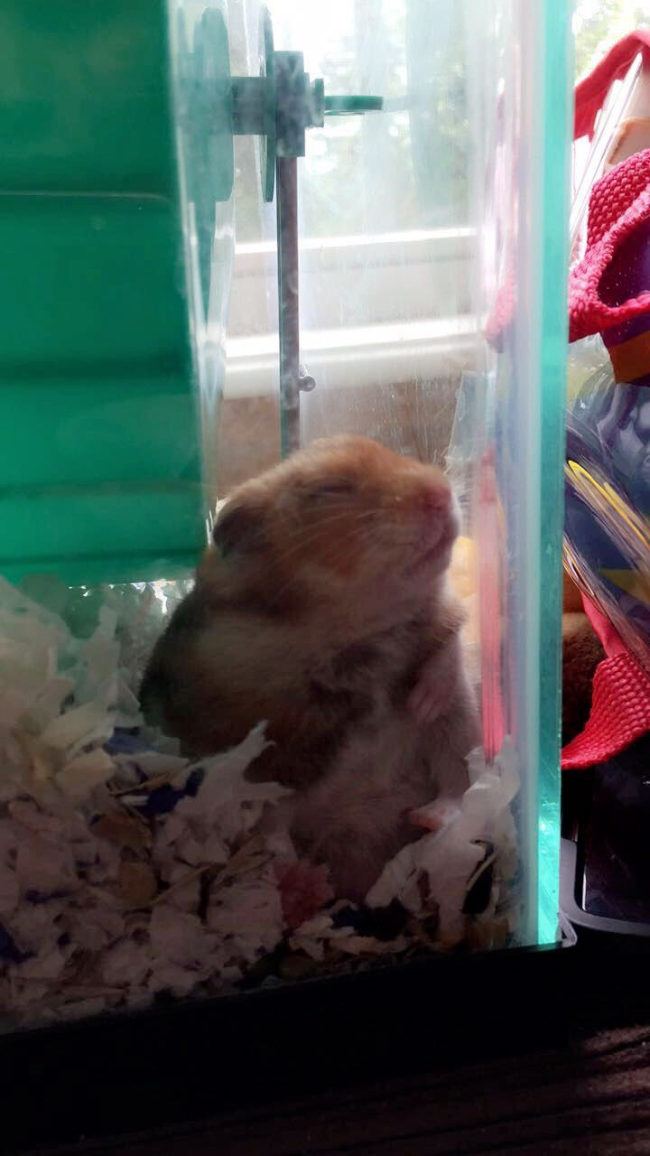Pin by Mary Finkel on My hamster(s) ️ Hamster names