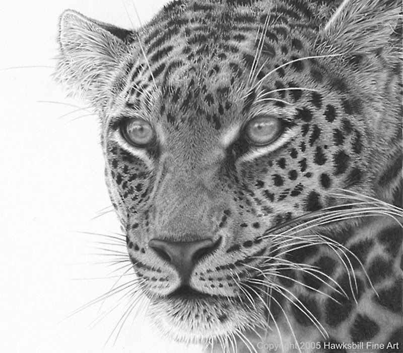 леопард рисунок карандашом