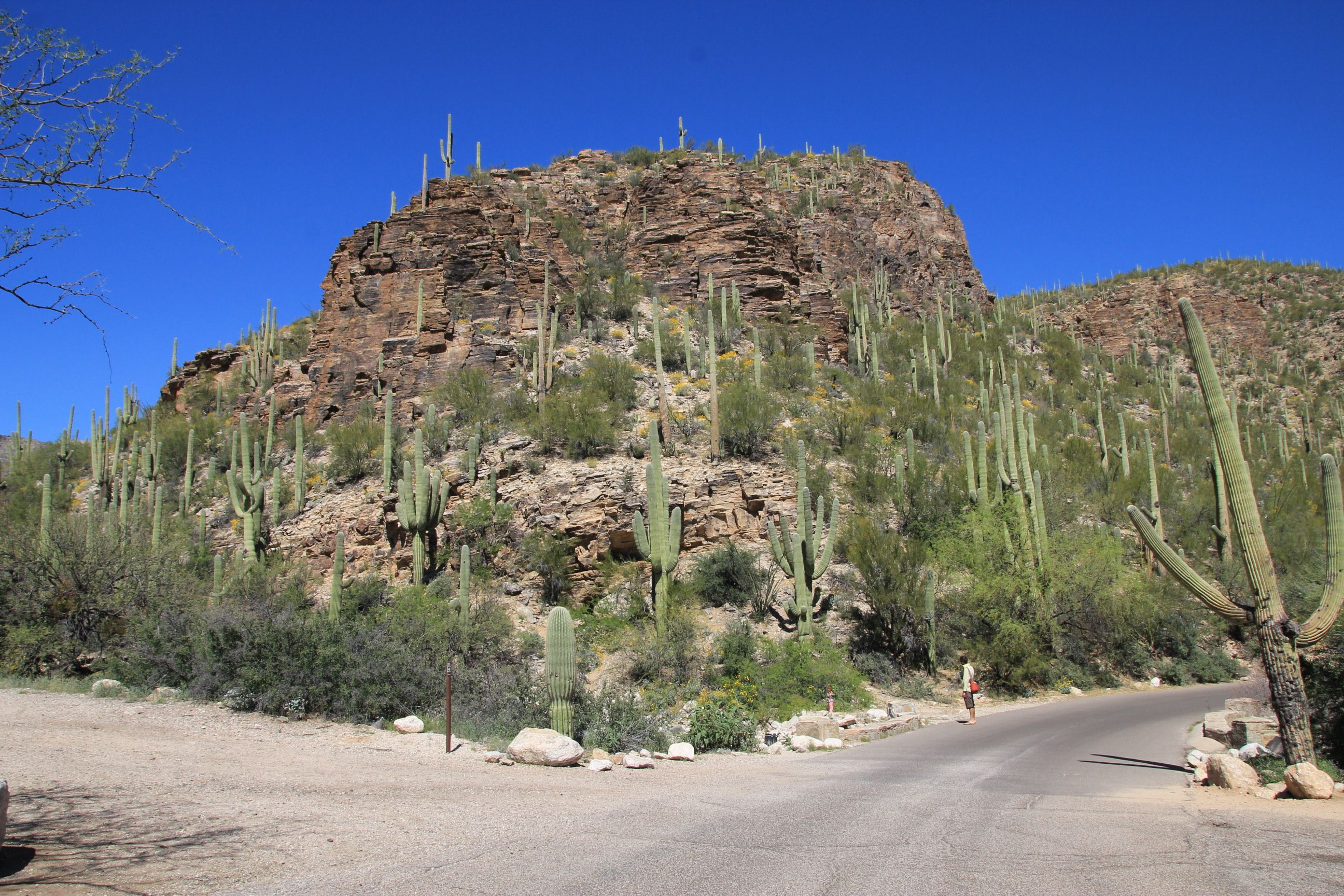 Sabino Canyon Recreation Area in Tucson, AZ