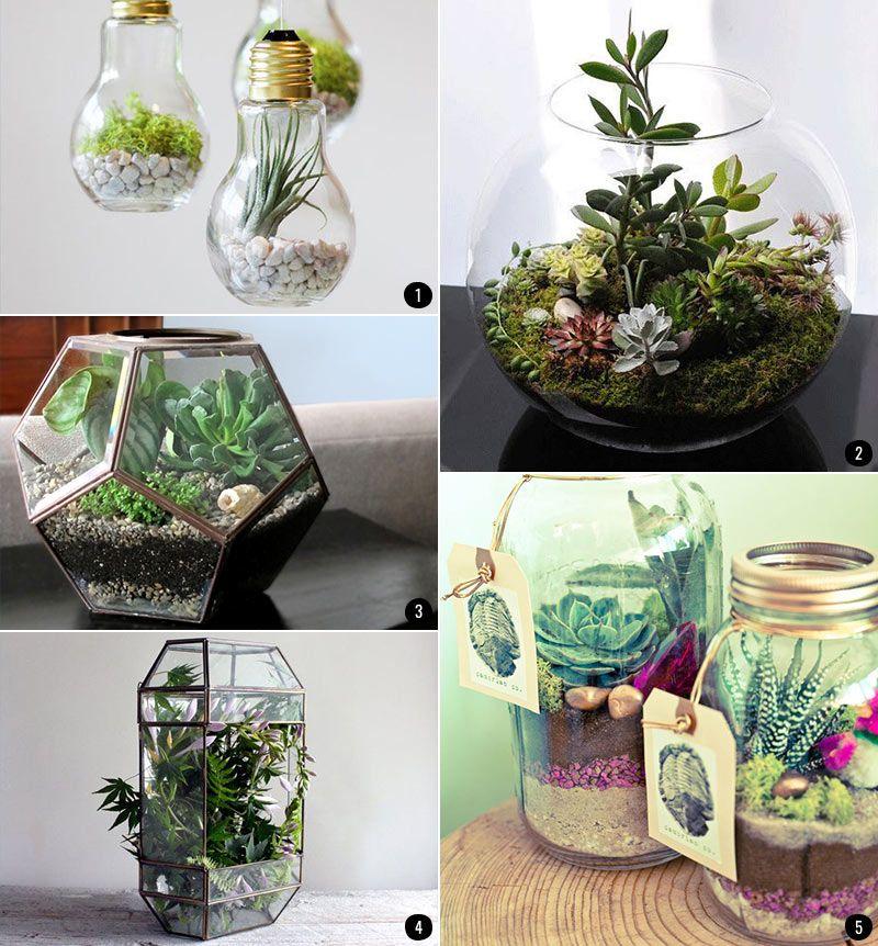 Interiores con plantas terrarios suculentas cactus - Plantas para decorar interiores ...