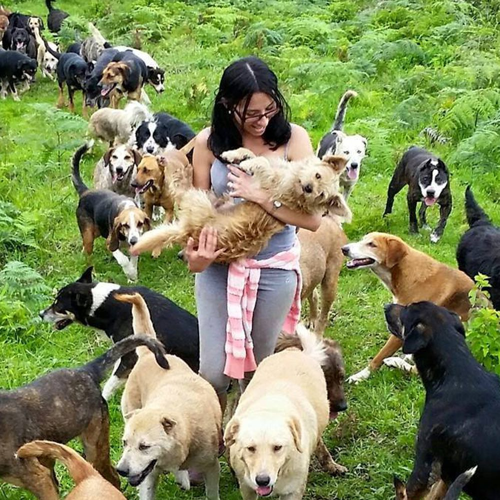 This Costa Rican Dog Sanctuary Is A Puppy Lovers Dream Costa Rica Travel Costa Rica Vacation Costa Rica