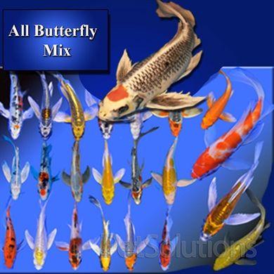 Beautiful butterfly koi package koi pinterest for Petco koi fish