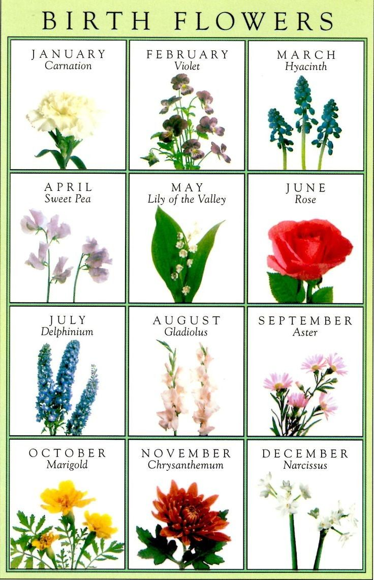 Why not choose your birth flower to go into your bouquet