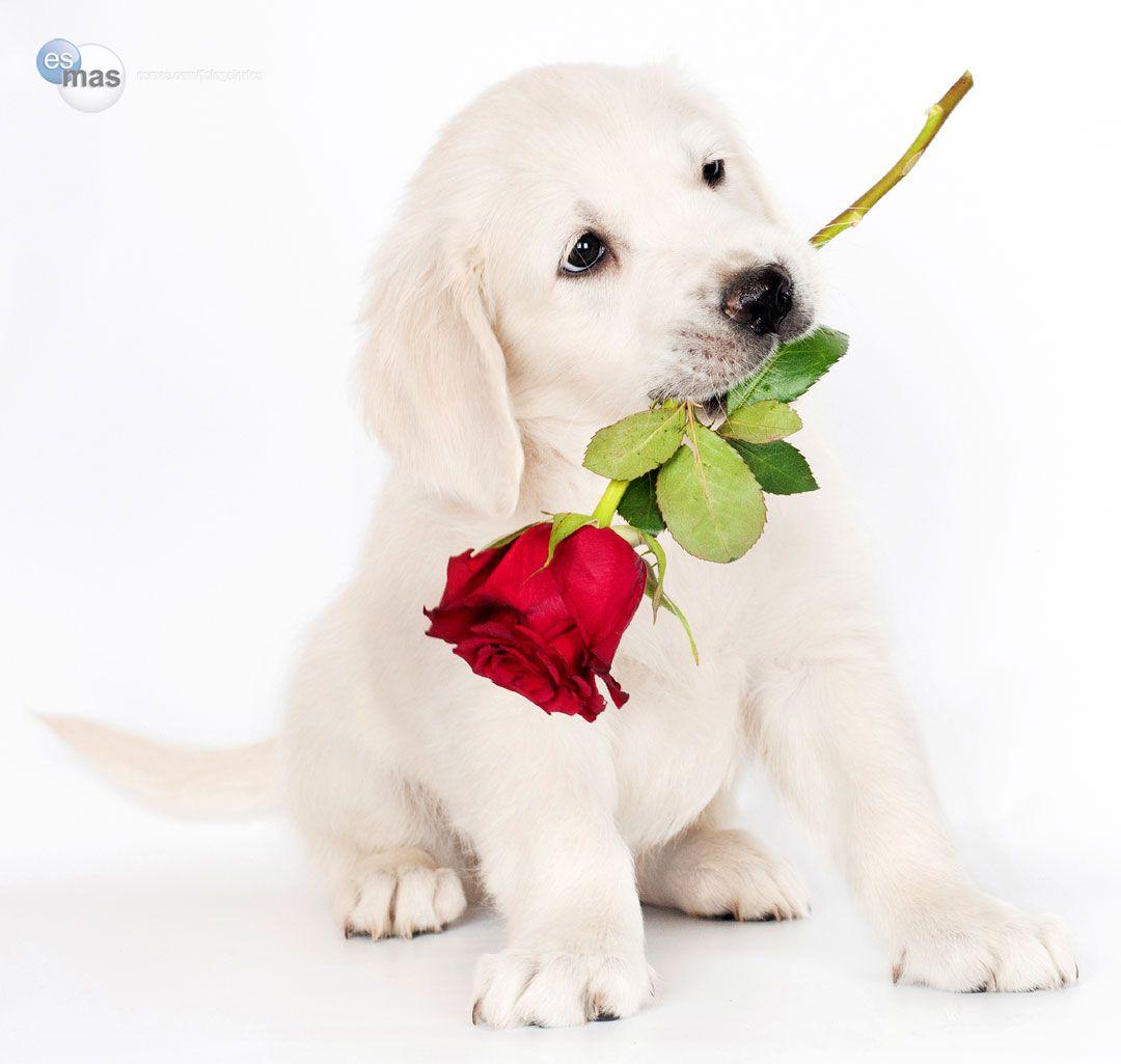 Esmas Fotogaleras Frases de perros para sonrer